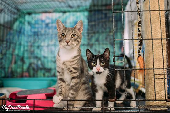 Bequests - The Cat Corner