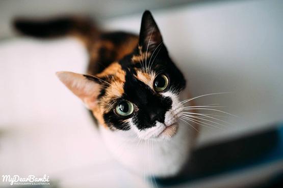 Sponsorships - The Cat Corner